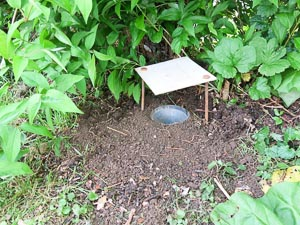 Pitfall trap with funnel