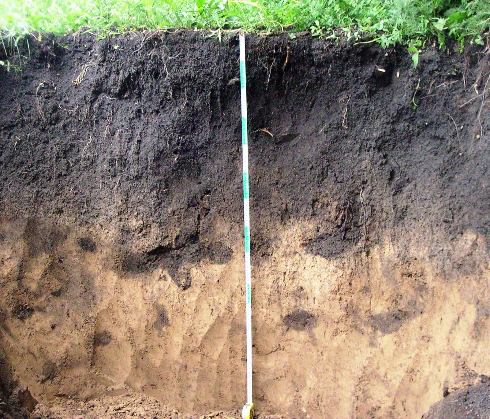 Communication on this topic: How to Lower Soil pH, how-to-lower-soil-ph/